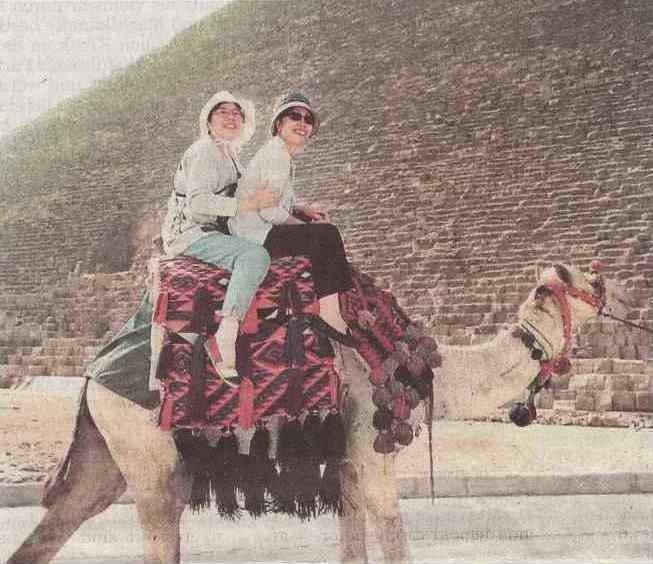 witz kamele pyramiden